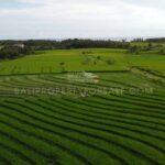 Land-for-sale-Tabanan-FH-1274-e