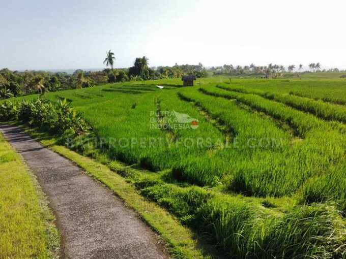 Land-for-sale-Tabanan-FH-1276-c
