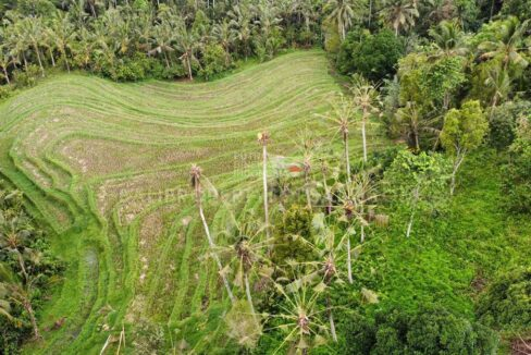 Land-for-sale-Tabanan-FH-1292-b