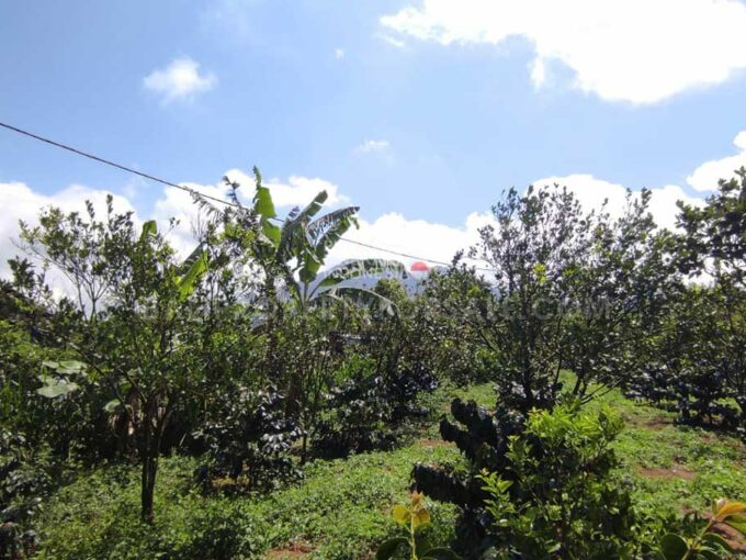 Coffee-plantation-for-sale-FH-1459-h