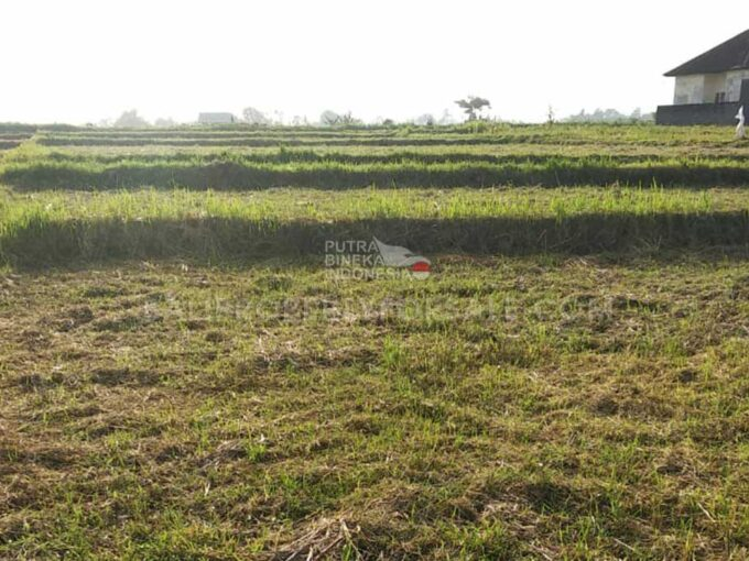Land-for-sale-Tabanan-FH-1453-a